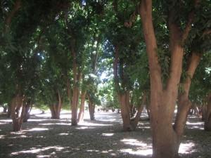 man.grove.near