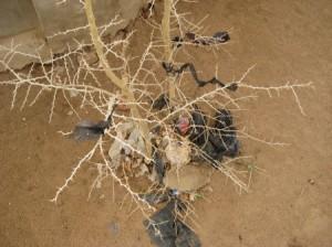 plastic_tree