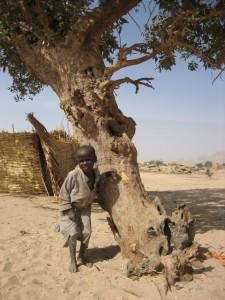 Steven Cohen Psychiatrist boy.tree.1